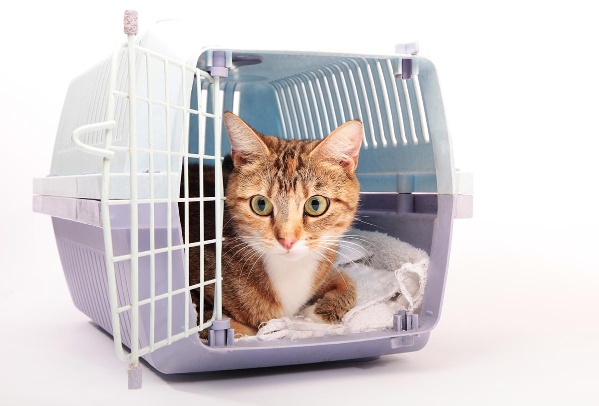 cat in carrier for travel holiday pet safety tip