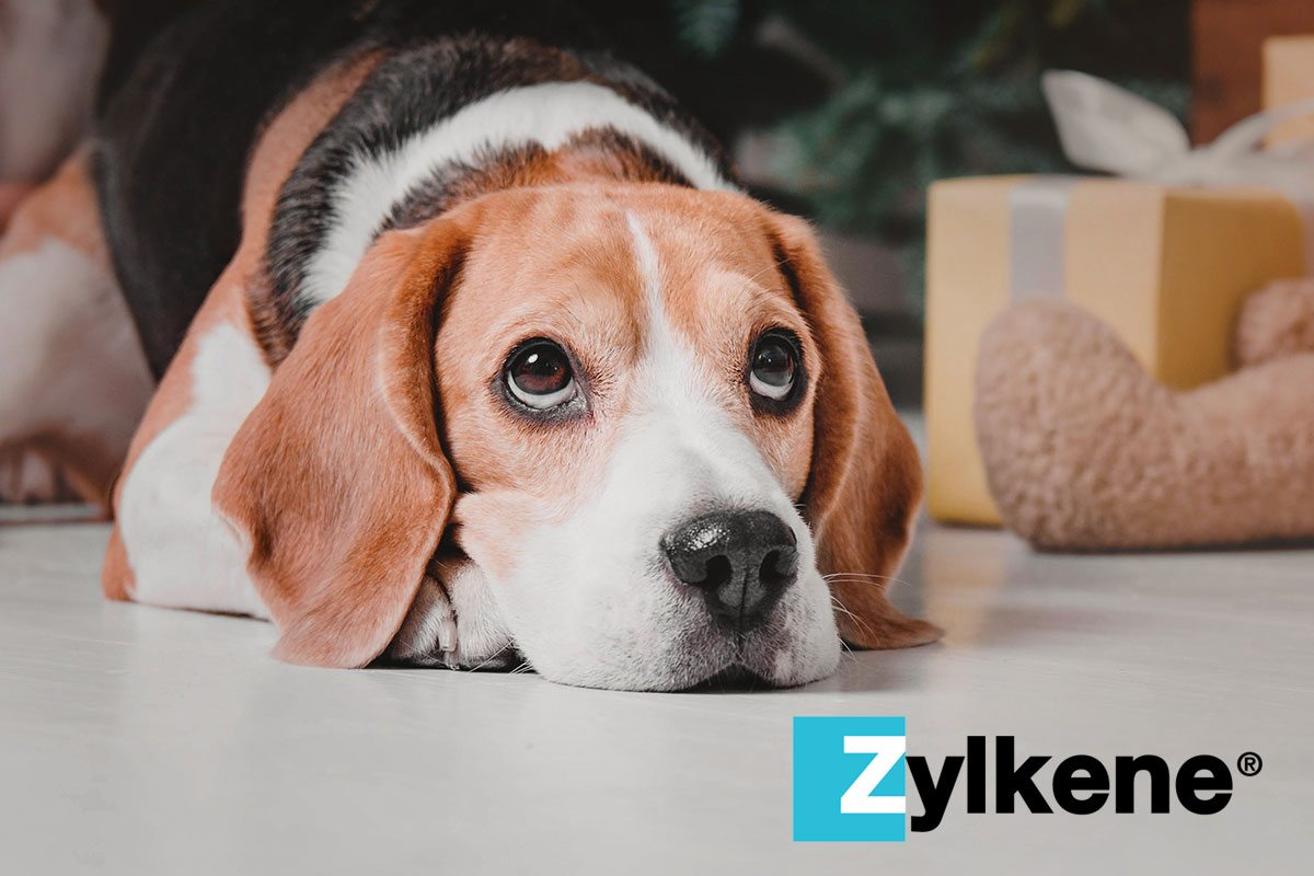 holiday pet safety tip: zylkene for dogs and cats